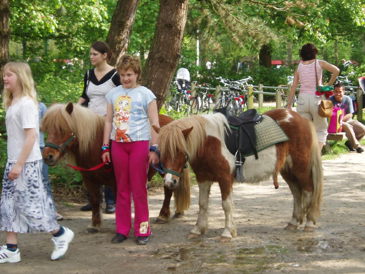 Ponyverhuur Stadspark 2